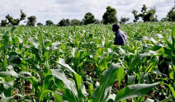 Fertile farmland on the Jos Plateau